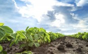 Environmental impact of genetically modified crops unveiled