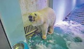 'Sad' polar bear zoo plans to expand