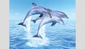 Protect dolphins, UK govt urged