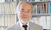Yoshinori Ohsumi wins Nobel prize in medicine for work on autophagy