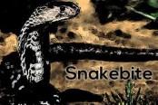 Youth dies from snakebite in Rajshahi