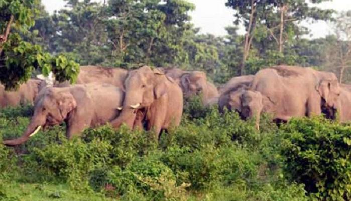 Elephant attack leaves 3 dead in Sherpur