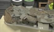 Sea Monster Swam Oceans 170 Million Years Ago