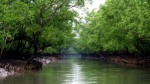 UNESCO and IUCN call to cancel coal-fired Rampal power plant near Sundarbans