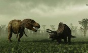 Dinosaurs Were Social Animals, Not Solo Creatures, Reveals Latest Study