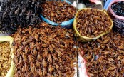 Thailand to export insects to EU for human consumption