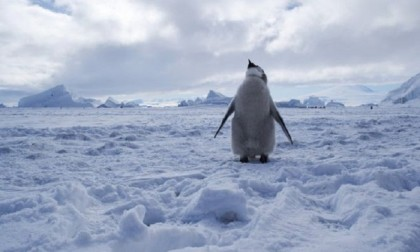 Protection agreed for vast Antarctic sea