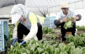 Foreign workers sought for farming in Japan