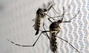 Brazil's Factory-Grown Mutant Mosquitoes To Breed Out Diseases
