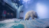 Video of world's 'saddest polar bear' in China sparks outrage (watch video)