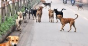 Now, gold coins for culling stray dogs in Indian Kerala