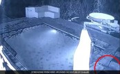 Crocodile attacks couple in hotel pool while enjoying a late-night swim (watch video)