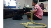 Odd News: Thai man marries pet cobra