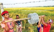 HC orders to allow Santals to harvest paddy