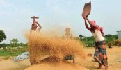 Government to explore new market for rice export