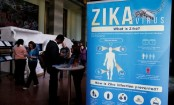 How Highly Potent Antibody Neutralises Zika Discovered