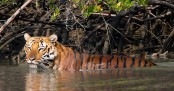 Experts urge private sector to come forward for saving tiger, Sundarbans
