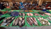 Paris climate deal can save millions of fish, livelihoods