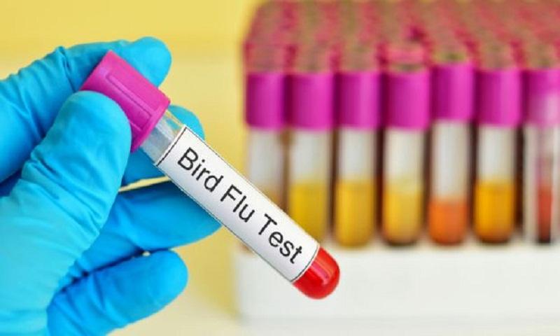 Ireland confirms bird flu case