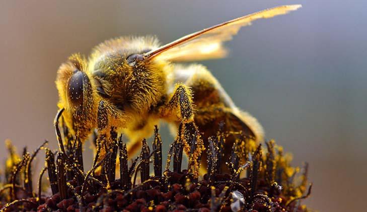 Bangladesh need to reduce loss of pollinators