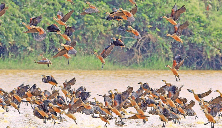 Jahangirnagar University stages bird fair amid festivity