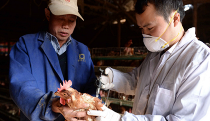 New human H7N9 case reported in SW China