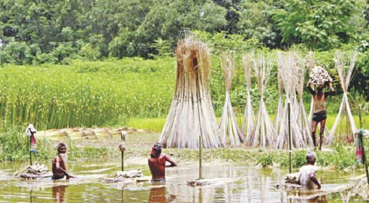 Bangladesh fears setback in jute export to India