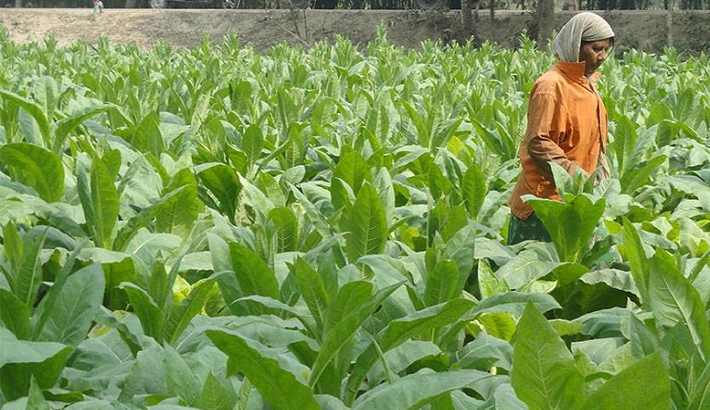 Bumper winter vegetable yield likely in Rangpur region