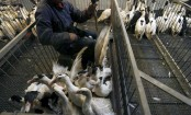China confirms one more H7N9 bird flu death