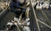 China confirms one more H7N9 bird flu death