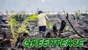 HSBC allegedly funding Indonesian forest destruction