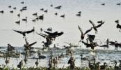 4 poachers jailed in Khulna for killing birds