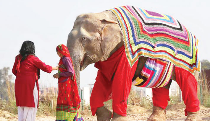 Knitting Jumpers For Elephants Fake : Villagers knit jumpers for elephants to protect cold