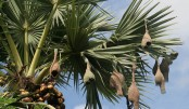 One million palm trees plantation begun to cut lightning toll