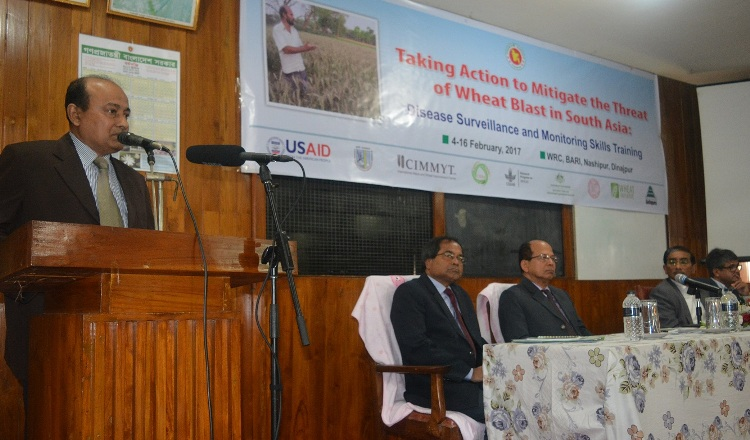 Wheat Blast surveillance training starts in Dinajpur