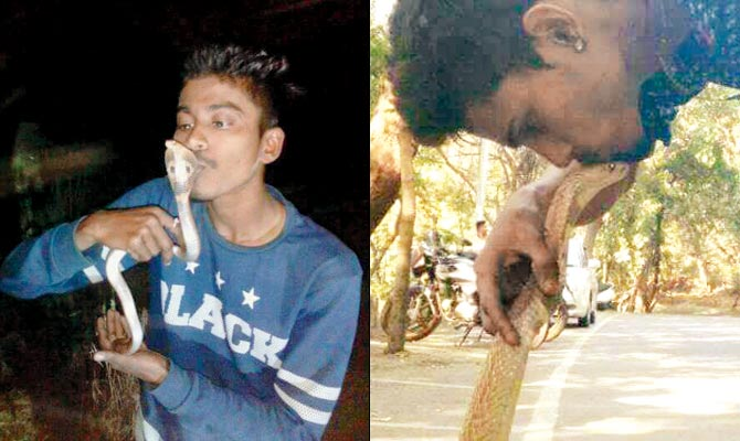Man kisses rescued cobra to take selfie, gets bitten and dies