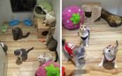 Malaysia five-star cat hotel with a spa and dating service (Photos)