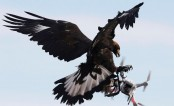 French army grooms eagles to down drones