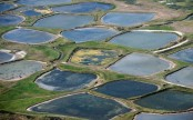 Small ponds have outsized impact on global warming: study
