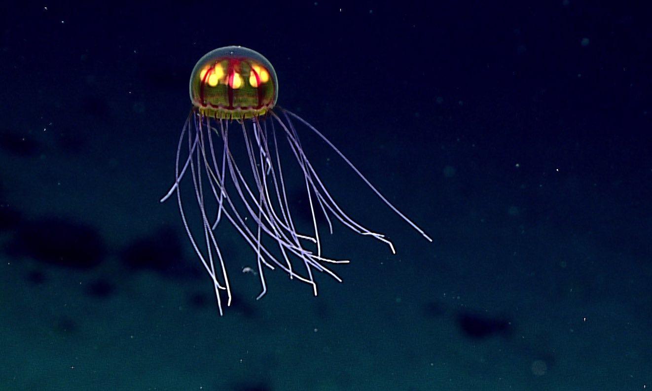 Deep sea life faces dark future due to warming and food shortage