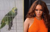 Parrot sings Rihanna song better than Rihanna (Video)