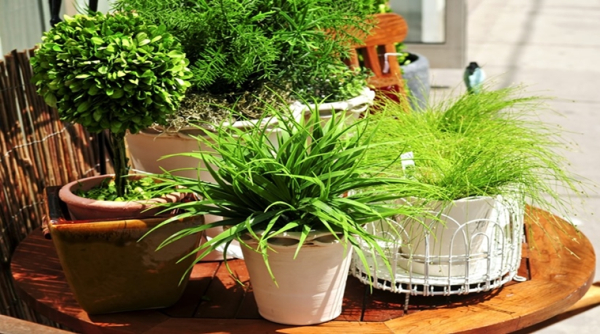 Easy ways to create a garden at home