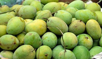 Bagging technology creates scope for mango export | 2017-03-01