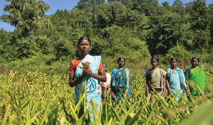 Rural women show how to cut dependence on forest