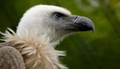 First-ever vulture rescue centre set up in Dinajpur
