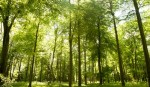 Forests key to mitigating climate change impact