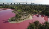 Australian lake turns vivid pink