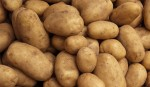 Yield, price make potato growers happy