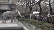 Elephant whacks and kills trainer at Japan zoo