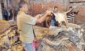 SC upholds order to shut down Hazaribagh tanneries